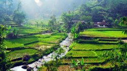 Saran Tempat Tamasya Populer di Bogor yang Wajib Dikunjungi