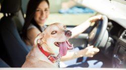 Bepergian Dengan Anjing