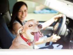 8 Tips Untuk Bepergian Dengan Anjing Anda